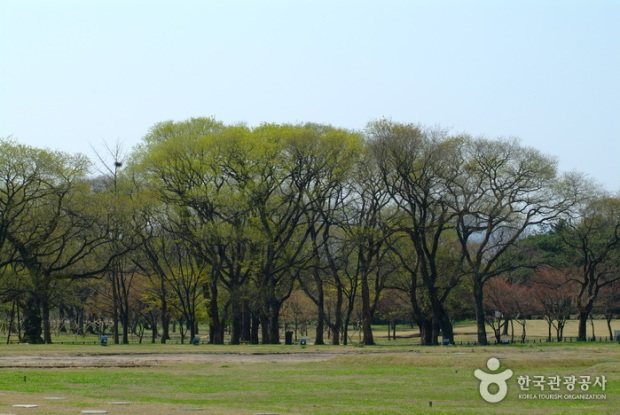 Beautiful trees in Gyerim Forest. Credit: KTO
