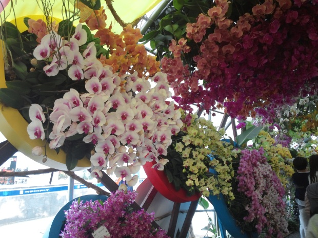 Beautiful orchids too ^^