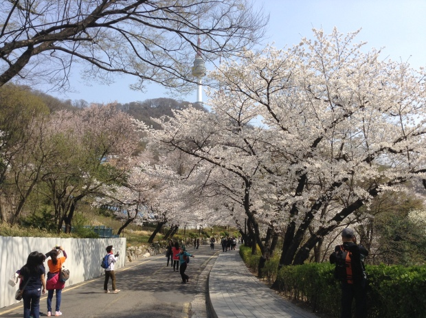 Area near Namsan Library with cherry blossom trees.